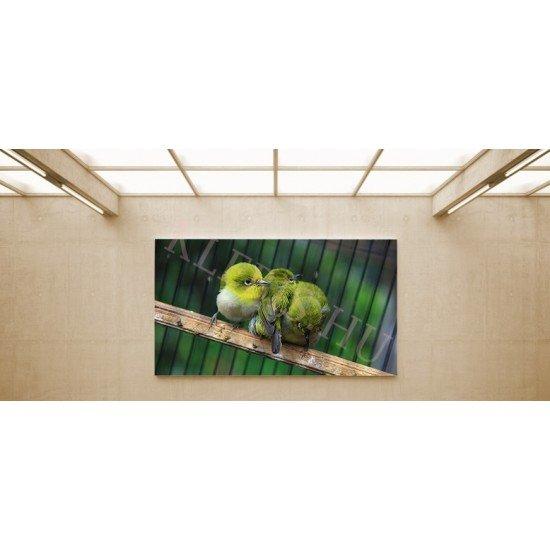 Három madár - vászonkép, vászonfotó, vakráma 45 × 30 cm