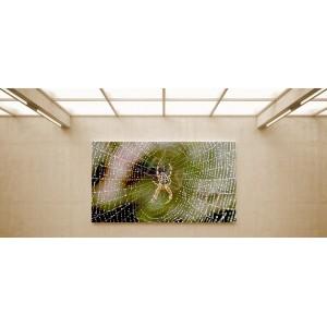 Keresztespók - vászonkép, vászonfotó, vakráma 45 × 30 cm
