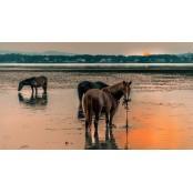 Vad lovak - vászonkép, vászonfotó, vakráma 45 × 30 cm